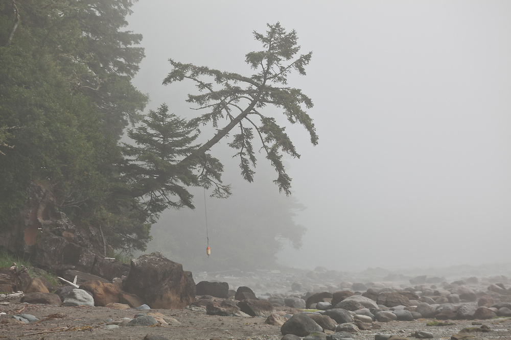 A lonely buoy hangs from a tree leaning over the beach near Bonilla Point, West Coast Trail, British Columbia, Canada.
