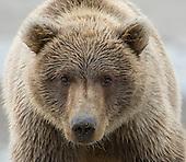Great Alaska Bear Camp