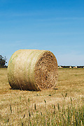 Round hay bales in a paddock on a farm after baling in rural Mingay, Victoria, Australia. <br />