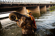 25th May 2014, Yamuna River, New Delhi, India. A mahout interacts with an elephant as it bathes under a bridge in the Yamuna river in New Delhi, India on the 25th May 2014<br />