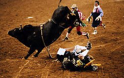 Cowboy bucked off by a bull