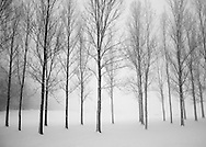 A line of bare trees outlined against snow in the forest of Chalet-à-Gobet, Lausanne, Switzerland.