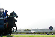 Horses leave the gate during the L'Ormarins Queens Plate event at Kenilworth race track, Cape Town. Image by Greg Beadle Global sport and corporate event photography by Greg Beadle. Greg captures the energy and emotion of international events including the World Economic Forum, Tour de France, Cape Epic MTB and the Cape Town Cycle Tour