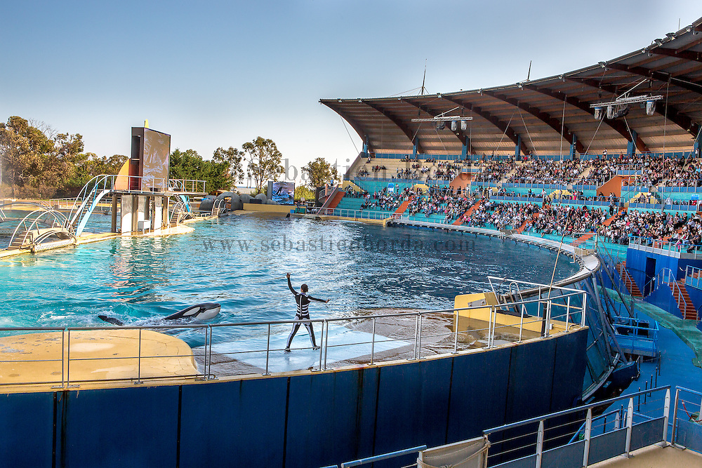 Spectacle des orques au Marineland d'Antibes // Orca show in Antibes marina park