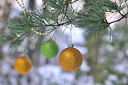 Three round gold and green Christmas ornaments and gold garland hang from the boughs of an Austrian pine tree (pinus nigra) with snow on the branches and copy space for a greeting card or other text.
