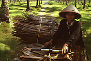 Pangandaran, Java, Indonesia- woman with palm building materials bundled onto bicycle walking through palm groves.