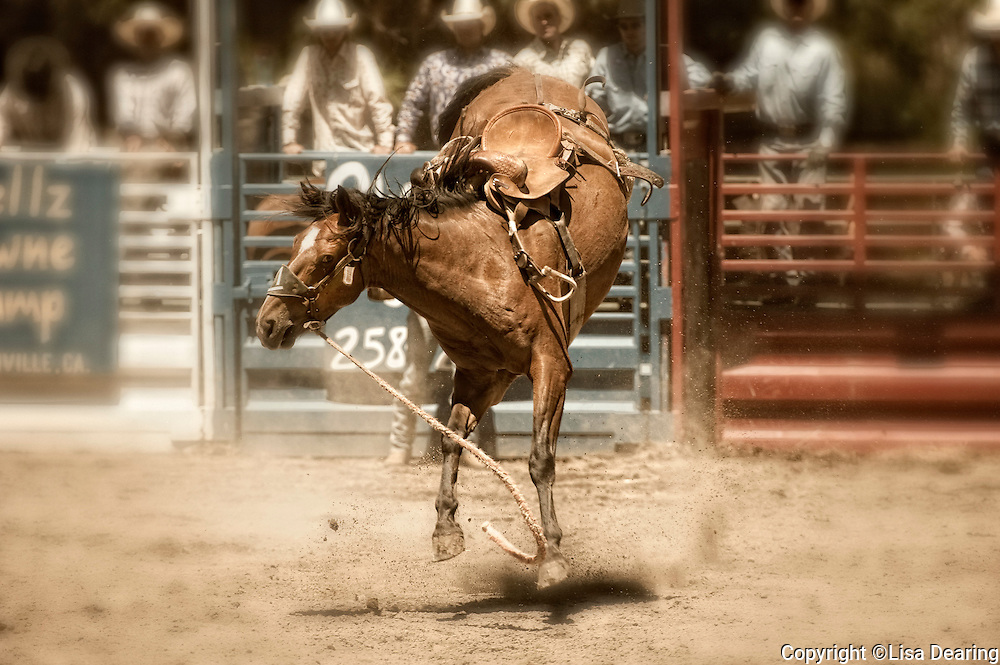 Bucking Horse, Taylorsville Rodeo, California