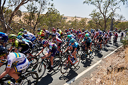 Ella Harris (NZL) in the bunch on Stage 2 of 2020 Santos Women's Tour Down Under, a 114.9 km road race from Murray Bridge to Birdwood, Australia on January 17, 2020. Photo by Sean Robinson/velofocus.com