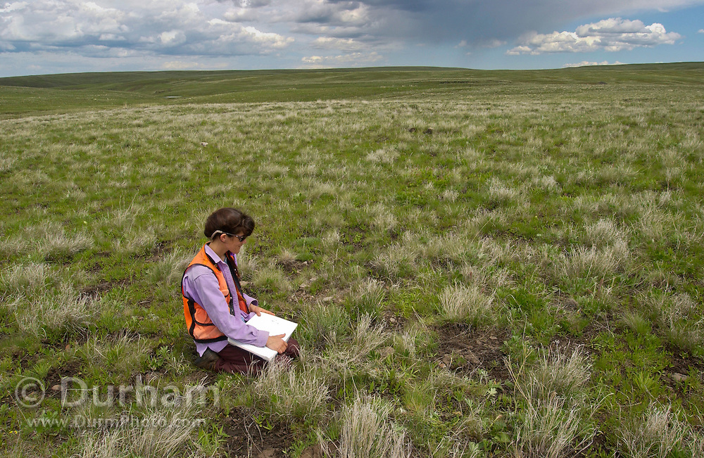 Staff botanist for The Nature Conservancy, Susan Geer, works to distinguish native plants and non-native plants during a weed survey on Zumwalt Prairie Preserve. While a seemingly impossible task given the scope of the grassland, preserve employees and volunteers work to keep the prairie as ecologically healthy as possible. (Fully released)