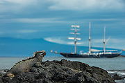 Marine Iguana (Amblyrhynchus cristatus)<br /> and yacht Mary Anne<br /> Fernandina Island<br /> GALAPAGOS ISLANDS<br /> ECUADOR. <br /> South America<br /> ENDEMIC TO THE ISLANDS