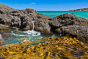 Kelp at Dummies Beach, Catlins, New Zealand