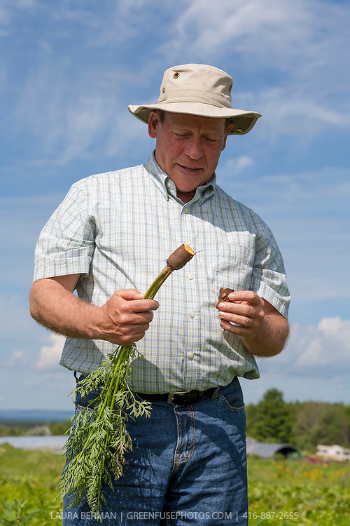 Organic farmer David Cohlmeyer inspects his Purple Haze carrots.