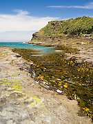 A small channel filled with bull kelp, Curio Bay, Clutha, New Zealand.
