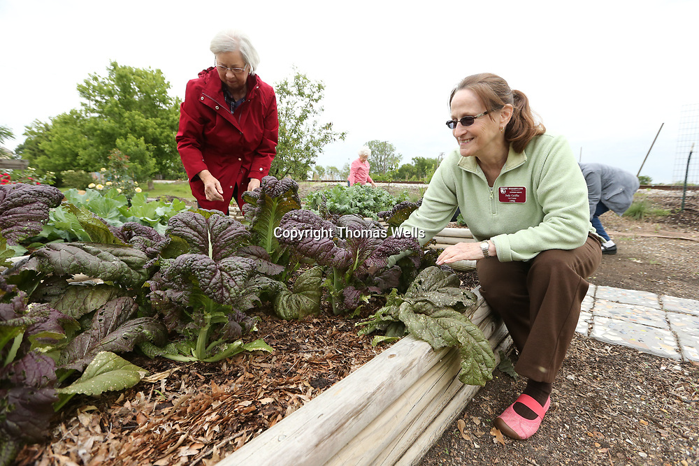 Sarah Harris, left, and Judy Griffie help clean out a bed at the community garden on Spring street.
