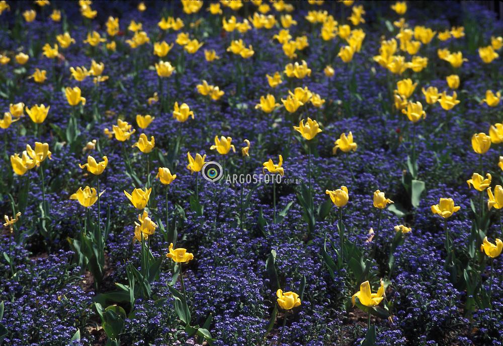 Budapeste, Hungria. 04/1995..Flores diversas./ Diverse flowers..Foto © Marcos Issa/Argosfoto