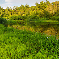 Grass grows on the shore of a pond at the Striar Conservancy, a Wildlands Trust preserve in Halifax, Massachusetts.