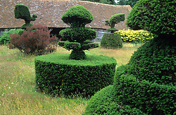 The topiary lawn at Great Dixter in summer. Taxus baccata - yew