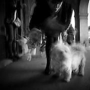 Paris - Place des Vosges - Juin 2012 - Un femme vient de sortir de chez elle avec une amie pour faire une ballade canine. Après un échange de quelques minute, elle essaie fait taire son chien qui aboie en ma direction.