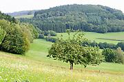 Landschaft mit Apfelbaum bei Wald-Michelbach, Odenwald, Hessen, Deutschland
