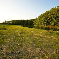 Salt marsh grasses on the banks of the York River in York, Maine.  High tide,