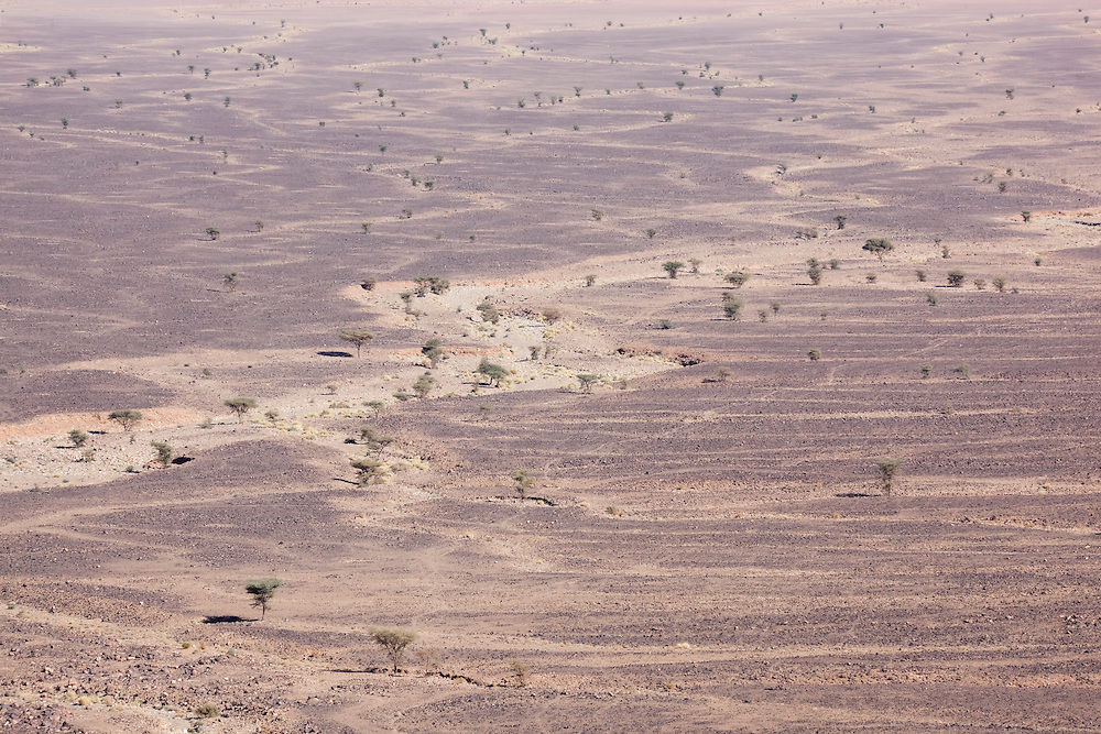 Stony desert landscapes with acacia trees, M'hamid, Sahara desert, Morocco.