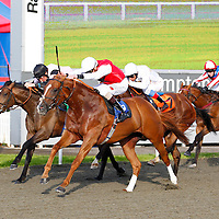 Noverre To Go and James Doyle winning the 7.20 race