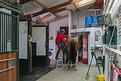 Van Hulle Pieter (BEL) - Jewel's Diamant<br /> Jewel Court Stud - Wuustwezel 2012<br /> © Dirk Caremans