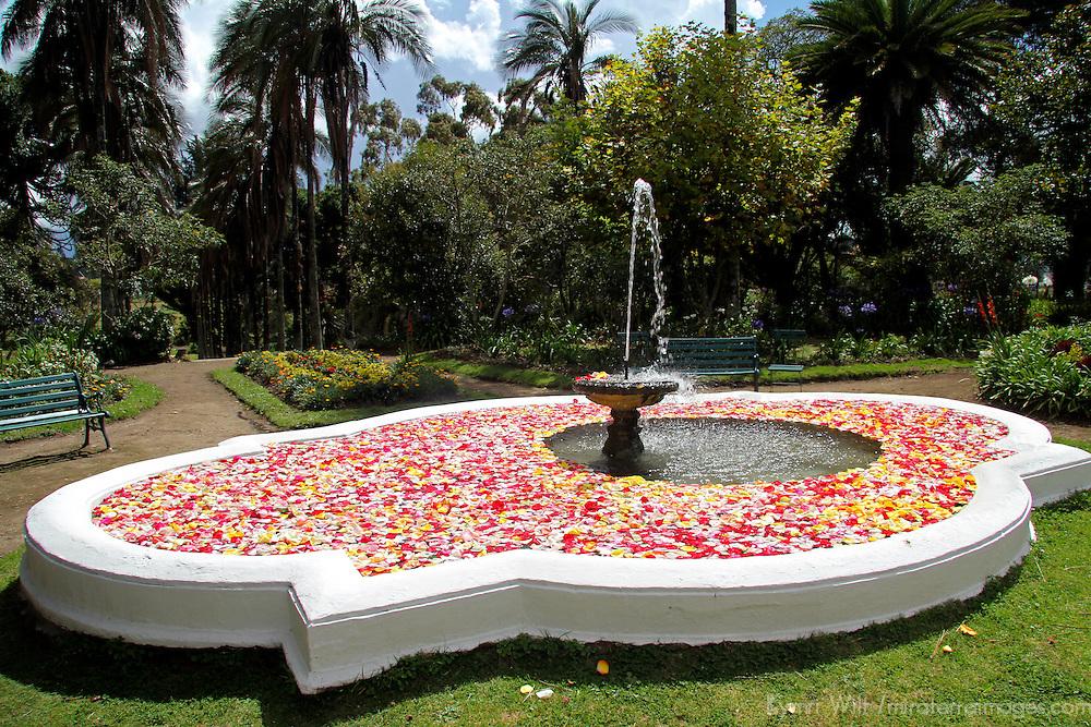 South America, Ecuador, Cayambe. Rose Petals float in the fountain in the garden of Hacienda Compania.