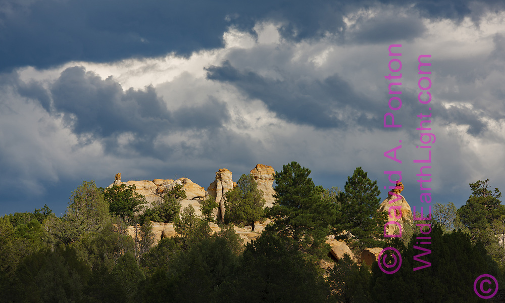 Sunlight catches sandstone pinnacle formations below dramatic storm clouds, with trees, Sandoval County west of the Sierra Nacimiento, New Mexico, © 2010 David A. Ponton