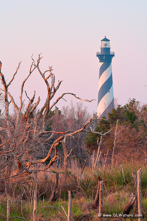 Unusual view of Cape Hatteras lighthouse  and trees.