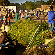 Young rower unloading forage at Gao port . Mali .West Africa.