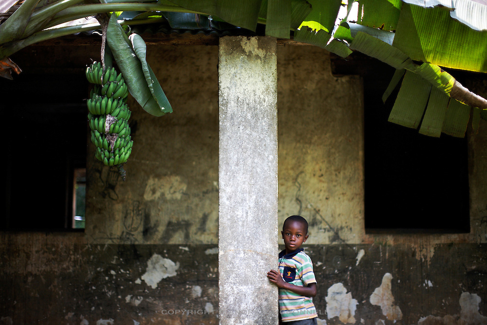 A boy stands in the ruins of an old building under a bunch of Ambon 2 bananas at Kilometer 5, Yangambi, DR Congo, on Saturday, Dec. 6, 2008. Km 5 was the research complex where the preeminent banana expert and Belgain scientist Edmond De Langhe planted his bananas and where he lived. He gathered bananas from all over the world to plant here and worked on developing subsistence bananas and investigating banana history in Africa. When De Langhe left in 1960 his bananas, including Ibota Ibota, spread all over Congo.
