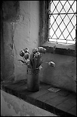 Tulips, St Mary Magdalene, Debenham 2015
