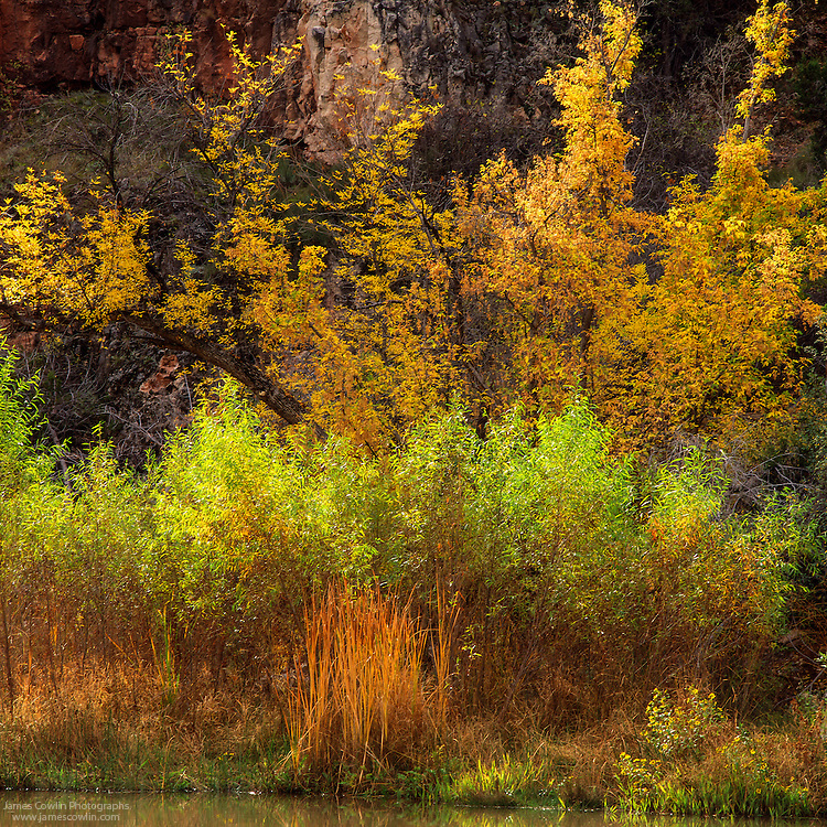 Fall foliage along the Verde River in central Arizona
