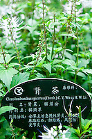 All the plants and trees are well labelled at the Guangxi Medicinal Herb Botanical Garden in Nanning.