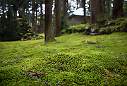 A blanket of moss covers the grounds of Heisenji Shrine in Katsuyama, Fukui Prefecture, Japan on Oct. 4, 2016.  ROB GILHOOLY
