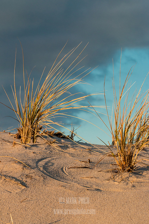 Sand swirls, beach grass, and sky above the dunes at Crowe's Pasture.