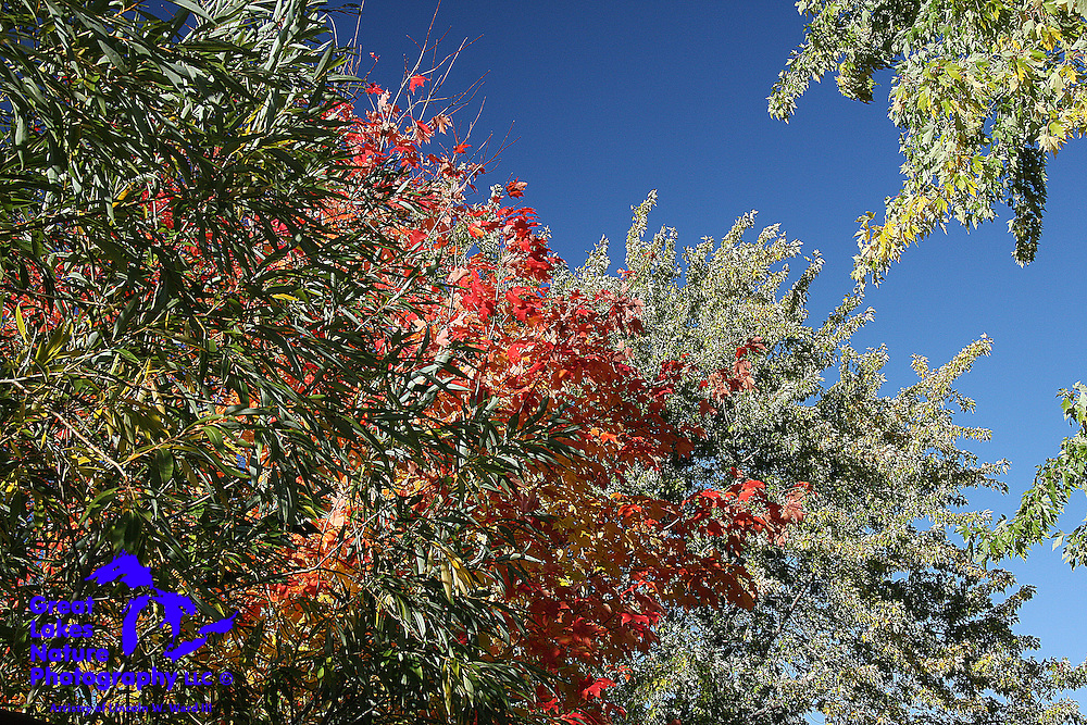 Color layers that are presented by mixed deciduous forests in autumn are quite beautiful, especially when contrasted against such a deep blue sky.