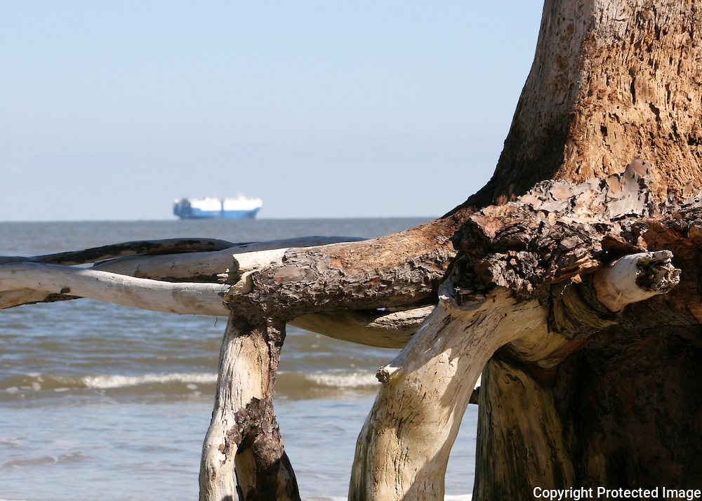 Driftwood beach driftwood with ship in background