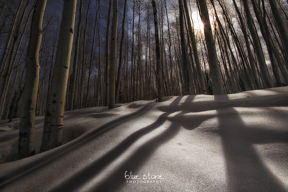 Winter aspens and shadows on snow create a dreamstate quality.<br />