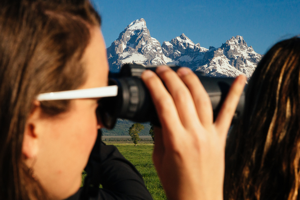 A Teton Science Schools wildlife tour looks for a dening family of coyotes in Grand Teton National Park, Wyoming. (Tracy Morgan)