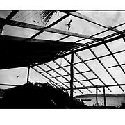 """Autor de la Obra: Aaron Sosa<br /> Título: """"Serie: Venezuela Cotidiana""""<br /> Lugar: Archipiélago Los Testigos, Estado Nueva Esparta - Venezuela <br /> Año de Creación: 2005<br /> Técnica: Captura digital en RAW impresa en papel 100% algodón Ilford Galeríe Prestige Silk 310gsm<br /> Medidas de la fotografía: 33,3 x 22,3 cms<br /> Medidas del soporte: 45 x 35 cms<br /> Observaciones: Cada obra esta debidamente firmada e identificada con """"grafito – material libre de acidez"""" en la parte posterior. Tanto en la fotografía como en el soporte. La fotografía se fijó al cartón con esquineros libres de ácido para así evitar usar algún pegamento contaminante.<br /> <br /> Precio: Consultar<br /> Envios a nivel nacional  e internacional."""