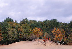 Trees and sand dunes in Amagansett, NY
