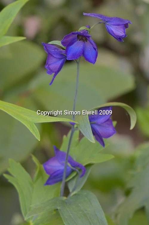Delicate blue flowers in a garden