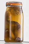 Monkey specimen, part of Tulane University's Natural History Museum collection.