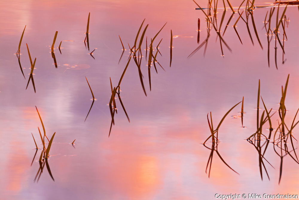 Reeds at dawn on Crow (Kakagi) Lake in Unorganized Kenora District and the township of Sioux Narrows-Nestor Falls<br />North of Nestor Falls<br />Ontario<br />Canada