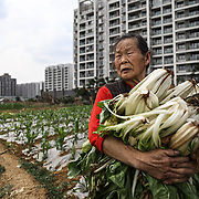 Farmer Wang Mei, 87, grows food in a plot in front of a giant relocation housing project in a southwestern Chinese city.<br /> <br /> Her neigbours were all moved from their farmland and resettled nearby in this purpose-built estate on the outskirt of the city.<br /> <br /> She, however, has not been given an apartment because she was a distant migrant without legal permit to live there. She bemoans this and said she wished the government would take her land and give her an apartment instead.<br /> <br /> China is pushing ahead with a dramatic, history-making plan to move 100 million rural residents into towns and cities between 2014 and 2020 &mdash; but without a clear idea of how to pay for the gargantuan undertaking or whether the farmers involved want to move.<br /> <br /> Moving farmers to urban areas is touted as a way of changing China&rsquo;s economic structure, with growth based on domestic demand for products instead of exporting them. In theory, new urbanites mean vast new opportunities for construction firms, public transportation, utilities and appliance makers, and a break from the cycle of farmers consuming only what they produce.<br /> <br /> Urbanization has already proven to be one of the most wrenching changes in China&rsquo;s 35 years of economic reforms. Land disputes rising from urbanization account for tens of thousands of protests each year.
