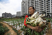 Farmer Wang Mei, 87, grows food in a plot in front of a giant relocation housing project in a southwestern Chinese city.<br /> <br /> Her neigbours were all moved from their farmland and resettled nearby in this purpose-built estate on the outskirt of the city.<br /> <br /> She, however, has not been given an apartment because she was a distant migrant without legal permit to live there. She bemoans this and said she wished the government would take her land and give her an apartment instead.<br /> <br /> China is pushing ahead with a dramatic, history-making plan to move 100 million rural residents into towns and cities between 2014 and 2020 &mdash; but without a clear idea of how to pay for the gargantuan undertaking or whether the farmers involved want to move.<br />