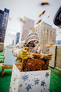 New York, New York, USA, 20120814: Andrew Cote er birøkter på et av Manhattans dyreste tak, Waldorf Astoria Hotel. Andrew Cote is beekeeper on one of Manhattans highly prized addresses. Six cubes buzzing with activity stands on the rooftop of the Waldorf Astoria Hotel. Photo: Orjan F. Ellingvag