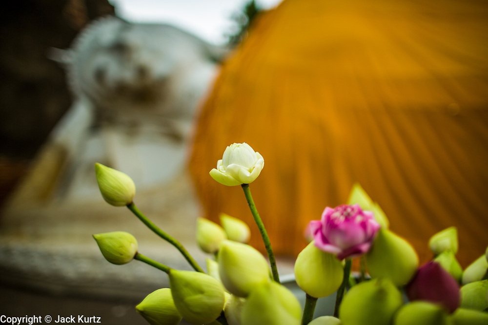 03 OCTOBER 2012 - AYUTTHAYA, THAILAND: Lotus blossoms in front of the Reclining Buddha at Wat Yai Chaimongkhon in Ayutthaya. Wat Yai Chaimongkhon is one of the most important temple's in Ayutthaya and was built in 1357. Ayutthaya is the former imperial capital of what was then Siam, now Thailand. Founded around 1350, Ayutthaya became the second capital of Siam after Sukhothai. Ayutthaya's location between China, India and the Malay Archipelago made Ayutthaya the trading capital of the rgion. By 1700 Ayutthaya was the largest city in the world with a total of 1 million inhabitants. The Ayutthaya empire and city were defeated by Burmese forces in April, 1767 when the city was sacked and its art treasures, libraries and archives were destroyed. All that remains in Ayutthaya now are ruins of former imperial temples and palaces because those were the only stone buildings of the time. Ayutthaya is less than 100 miles from Bangkok and is a popular day trip destination for Thai and foreign tourists.  PHOTO BY JACK KURTZ